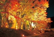 Autumn-Leaves-Festival