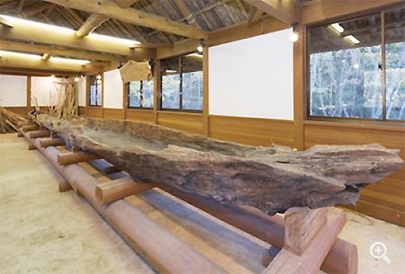 西湖から引き上げられた貴重な丸木舟