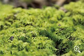 樹海を象徴する苔の絨毯