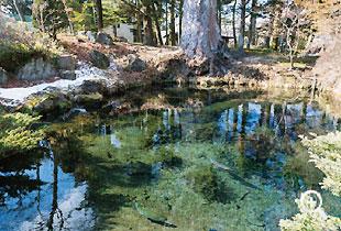 榛の木資料館の最奥にある「底抜池」(第三の霊場)